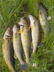 http://dampal.ru/wp-content/uploads/2012/08/18-225x300.jpg