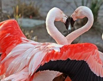 Сердце символ любви