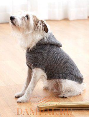 Пальто с капюшоном для собак